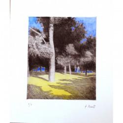 Bosque con suelo amarillo