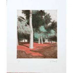 Bosque con suelo rojo